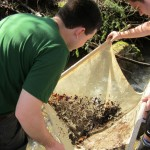 Macroinvertebrate Collection and Analysis | Aquatic Assessments