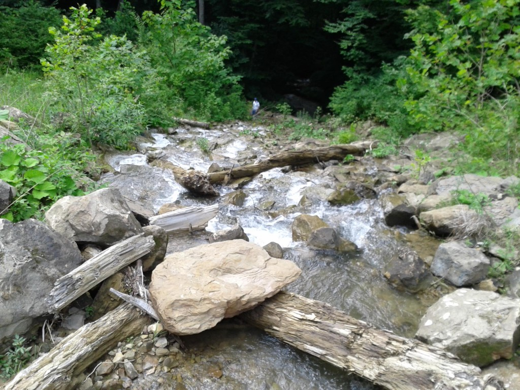 Ecological Assessments for Stream Mitigation