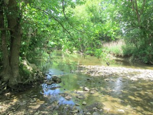 Bioassessment Macroinvertebrate Survey