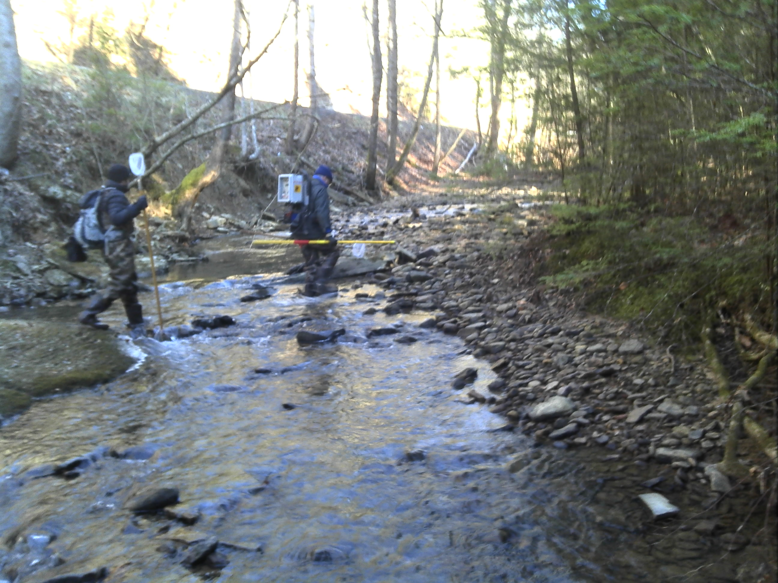 Aquatic Assessment Stream Fish Survey